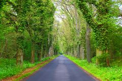 Empty road Royalty Free Stock Image