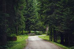 Empty road along trees in forest. View of small wooden bridge and empty road along trees in forest Royalty Free Stock Image