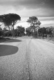 Empty road on atlantic coast with trees in black and white Stock Photography