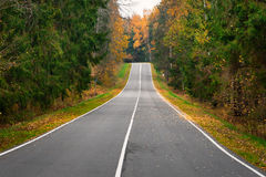 Empty road in the autumn forest Royalty Free Stock Image