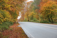 Empty road in autumn forest with beautiful colors Stock Photography