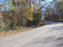 Empty road through autumn forest Stock Images
