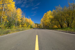 Empty road through autumn forest, Minnesota Stock Images