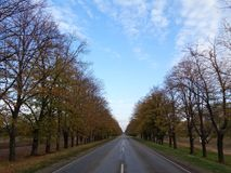An empty road among the autumn trees. Under a blue cloudy sky Royalty Free Stock Photography