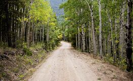 Empty Road Between Birch Trees during Daytime Royalty Free Stock Image