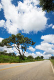 Empty road at Brazil Stock Photography