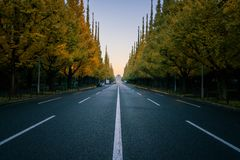 Empty road in city with trees in autum. City street, straight road in the city. Transportation concept. Ginkgo trees at Icho Namiki Avenue or Road, Meiji Jingu Royalty Free Stock Image