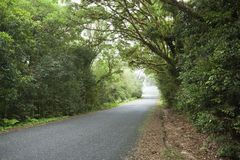 Empty road in cloudy rainforest Royalty Free Stock Images
