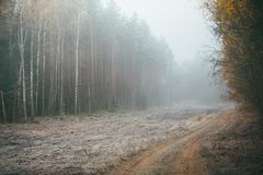 Empty road in countryside with autumn forest in perspective. And mist. Green and orange trees Royalty Free Stock Photos