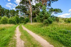 Empty road in the countryside. With trees and meadows in surrounding. perspective Royalty Free Stock Photos