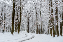 Empty road covered in snow Stock Photography
