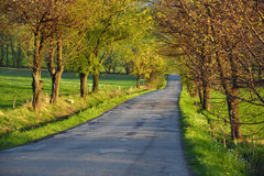 Empty road in Czech Republic Stock Photos