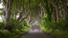 Empty road in Dark Hedges on rainy day. The Game of Thrones location Dark Hedges in Ballymoney Northern Ireland on rainy day with no people stock image