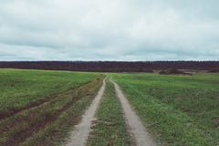 Empty road in field. Empty country road in green field. Forest on background Stock Photography