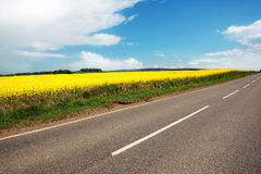 Empty road with fields of canola Royalty Free Stock Image