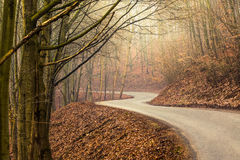 Empty road through forest in autumn Royalty Free Stock Image