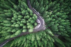 Empty road in a forest from a drone. Empty road in a forest at early winter time. Aerial view from a drone looking down royalty free stock photo