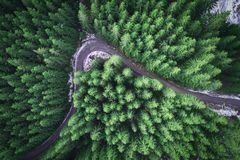 Empty road in a forest from a drone Royalty Free Stock Image