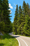 Durmitor National Park. Empty road in the forest of Durmitor National Park in Montenegro Stock Photo