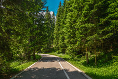 Empty road in the forest. Of Durmitor National Park in Montenegro Stock Images