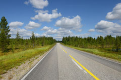 Empty road in forest Stock Images