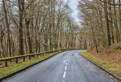 Empty Road in a Forest Royalty Free Stock Image