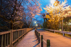Empty road in forest in night Royalty Free Stock Images