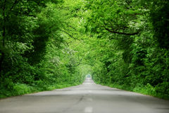 Empty road through the forest Royalty Free Stock Image