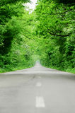 Empty road through the forest Royalty Free Stock Photos