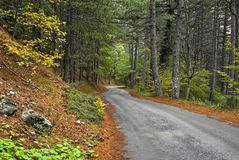 Empty road in a forrest. Royalty Free Stock Photo