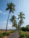 Empty road in Goa at sunny day. Surrounded by coconut trees stock photos
