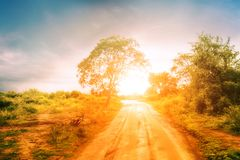 Empty road going through savannah landscape under sunset sky Royalty Free Stock Image