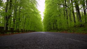 Empty road in a green spring forest. Asphalt countryside road of a mountain forest.  Mountain Road On Season. Early spring in the. Countryside stock video