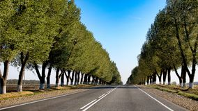 Empty road with trees planted in a row going forward on a summer day. Empty road with green trees planted in a row going forward on a summer day. Moving forward Stock Photography