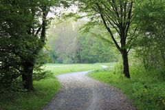 Empty road. Green road trees walkway Royalty Free Stock Photography