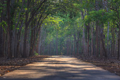 The empty Road at Historical Park. Royalty Free Stock Photo