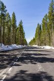 Empty road inside Yellowstone National Park royalty free stock image
