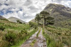 Empty Road Ireland 0020. Empty mountain road with trees, mountains and grass in the middle, known in Ireland as a `boreen` road. Location: west Kerry highlands Royalty Free Stock Photos