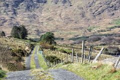 Empty Road Ireland 0014. Empty mountain road with grass in the middle, location: the Black Valley, west Kerry highlands off the Ring of Kerry near Killarney royalty free stock image
