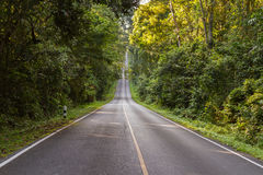 Empty road in jungle on background for nature. Royalty Free Stock Image