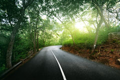 Empty road in jungle Royalty Free Stock Images