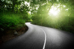 Empty road in jungle Stock Photos