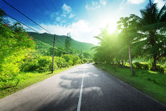 Empty road in jungle Stock Photo