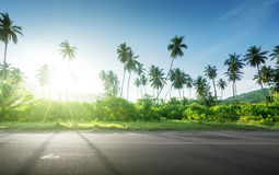 Empty road in jungle Stock Photography