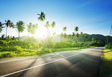 Empty road in jungle Stock Images
