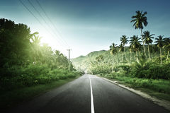 Empty road in jungle Royalty Free Stock Photography