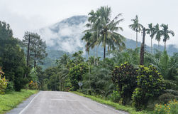 Empty road in jungle Royalty Free Stock Photos