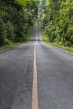 The empty road. Empty road that led up to the hill in the forest Royalty Free Stock Image