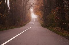 Empty road in the morning passing through a forest covered in mist or fog stock photo