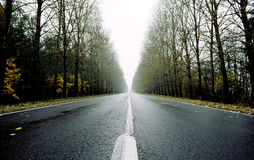 Empty road near Izborsk. Road with trees and fog in autumn Stock Photography